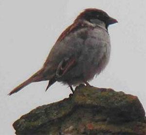 http://kungrad.narod.ru/4/Birds/8.jpg